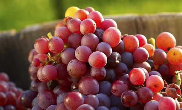 Является ли бессемянный виноград полезным для здоровья?