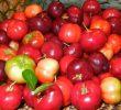 5 побочных эффектов ямайской вишни для здоровья (мунтингии)