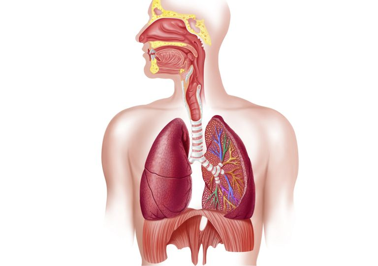 11 шокирующих фактов о дыхательной системе