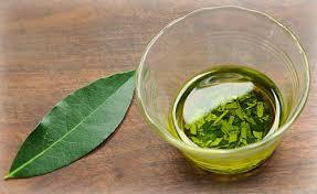 Польза масла Бучу для здоровья кожи – натуральное лечение